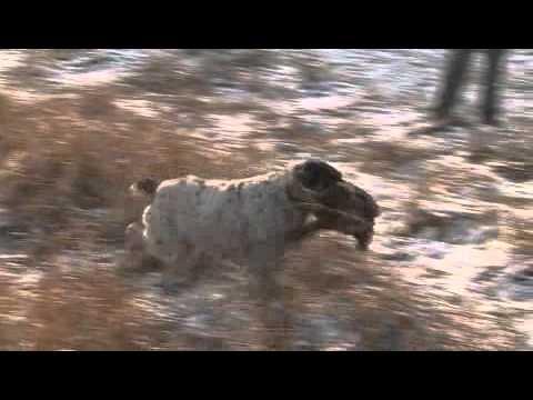 Zakončení lovecké sezóny v Bohuslavicích