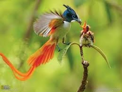 NATGEO WILD - WILD ASIA - Secret Asia - Documentary HD