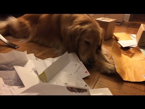 monthly - Subscribe to my Channel: ✦✦✦ http://bit.ly/NoodleOn ✦✦✦ OH EM GEE YOU GUYS!!! About 400 pieces of mail for this month's Mail Bag! It was like a huge Christma...