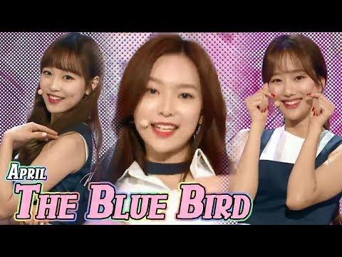 [HOT] APRIL - The Blue Bird, 에이프릴 - 파랑새 Show Music core 20180407 (видео)