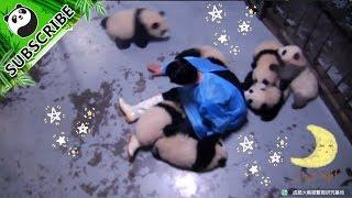 Kehidupan Perawat Panda yang Menyenangkan