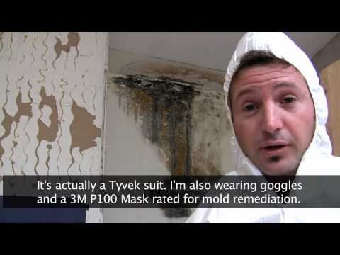 Killing Toxic Black Mold - How to Remove Mold Safely