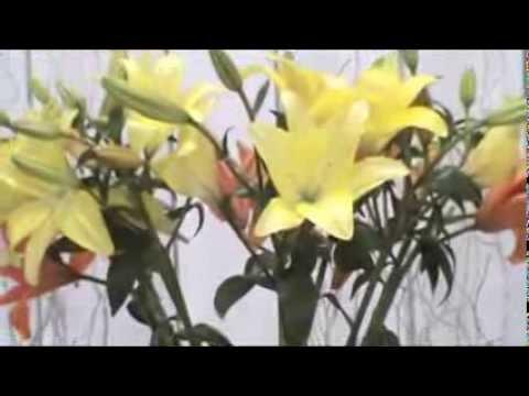 Elshaday Buffet Decoração & Flores!