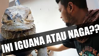 Video REVIEW IGUANA MIRIP NAGA PUNYA CV KAREPKU MP3, 3GP, MP4, WEBM, AVI, FLV Agustus 2019