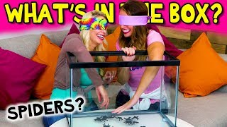 What's in the Box Challenge – Blindfolded Touch Test. Totally TV