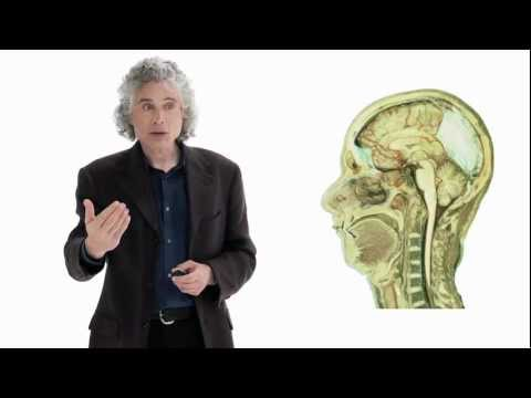 Window - Steven Pinker - Psychologist, Cognitive Scientist, and Linguist at Harvard University How did humans acquire language? In this lecture, best-selling author S...