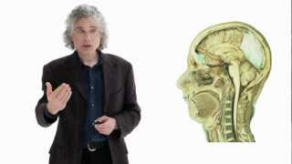 Download Video Steven Pinker: Linguistics as a Window to Understanding the Brain MP3 3GP MP4