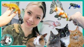 Feeding All My Pets! // VLOGMAS DAY 8 by Solid Gold Aquatics