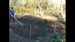 Борьба с сорняками. Весенний надрез почвы плоскорезом Мазнева