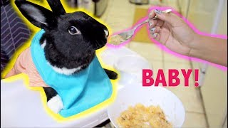 TREATING MY RABBIT LIKE A BABY FOR A DAY by Lennon The Bunny