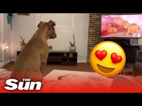 cane-piange-guardando-il-re-leone