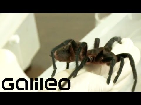 Tier Monster aus Brasilien - Schlangen, Spinnen ...| Galileo