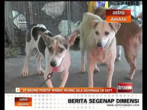 39 anjing positif wabak anjing gila sehingga 18 September