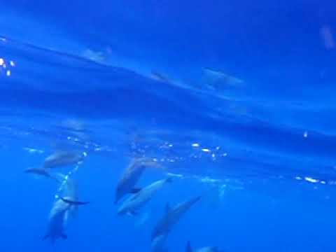 Go To: Rota dos Cetáceos