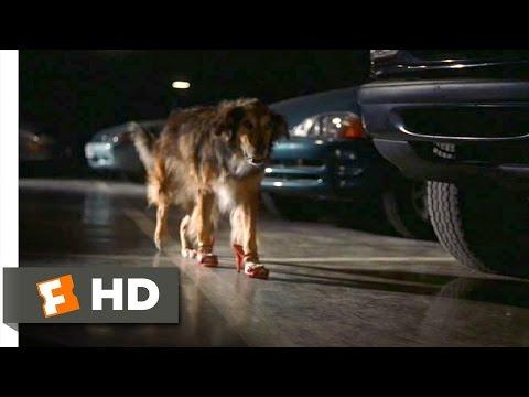 Bowfinger (4/10) Movie CLIP - High-Heel Wearing Dog (1999) HD