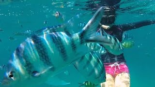 Koh Kood Thailand  City new picture : KOH KOOD ISLAND - IN 3 MINUTES - GOPRO HD