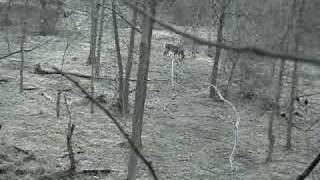 deer and the hunter YouTube video
