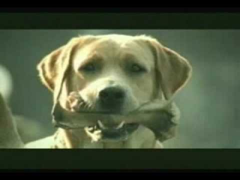 Banned commercial - funny dog suicide
