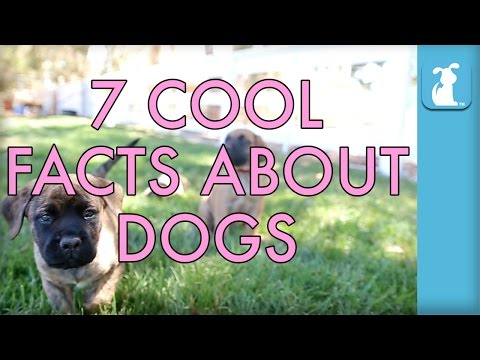 7 COOL FACTS ABOUT DOGS - Puppy Love