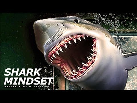Shark Mindset - Walter Bond