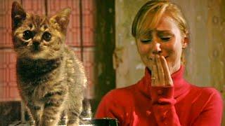Could You Kill A Kitten? - Derren Brown
