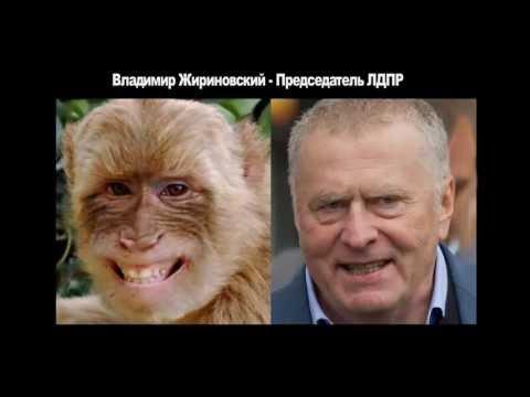 Юмор. Забавные сходства. Политики России. Прикольные фото. Смешное видео. (видео)