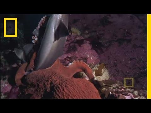 bạch tuọc khỏng lò tieu diẹt cá mạp