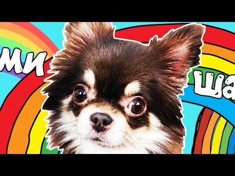 Моя собака Миша