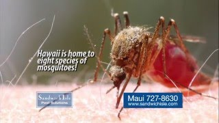 Mosquitoes are a big problem in Hawaii. Sandwich Isle is the leader in mosquito management in Hawaii.