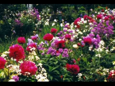 rancho-das-flores---vinicius-de-moraes---j-s-bach