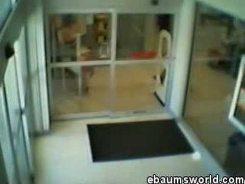 Guy Walks into Glass Door