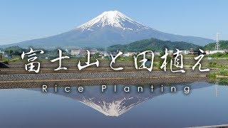富士吉田の富士山と田植え / Mt Fuji and Rice Planting