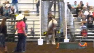 Video Winner of NW Washington Cowboy Race: Haflinger pony ridden bareback! download in MP3, 3GP, MP4, WEBM, AVI, FLV January 2017