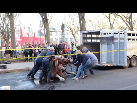 العرب اليوم - شاهد: عملية إنقاذ درامية لحصان في كندا تكلل بالنجاح