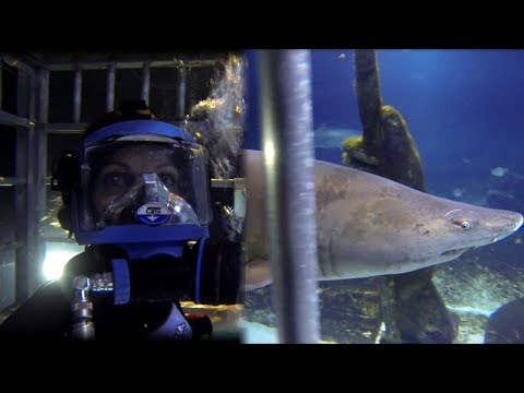 How Inside Edition's Lisa Guerrero Faced Her Fears Swimming With Sharks