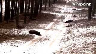 Video Aimpoint Trailer: Wild Boar Fever 4 MP3, 3GP, MP4, WEBM, AVI, FLV Oktober 2017