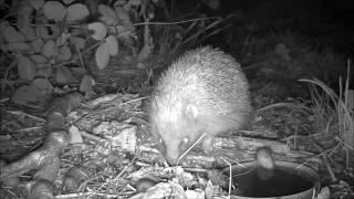 Wildlife Trail Camera - 4.10.2016