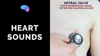 Nonton Heart Murmur Sounds  Cardiac Auscultation Sounds  Film Subtitle Indonesia Streaming Movie Download