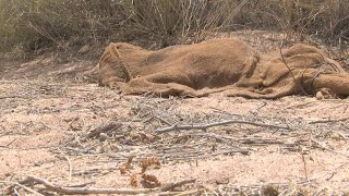 Woman finds dead animal in burlap sack, hogtied on the outside