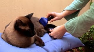 How To Groom Your Cat : How To Take Care Of Your Cat