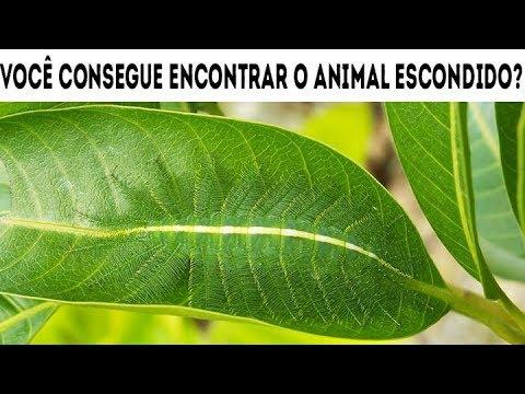 Fotos engraçadas - NINGUÉM CONSEGUE ENCONTRAR OS ANIMAIS ESCONDIDOS! ILUSÕES DE ÓTICA E DESAFIOS CEREBRAIS