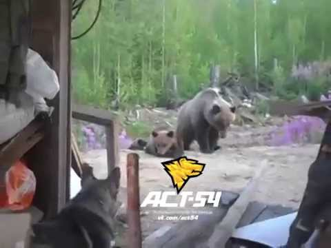 This Is Why You Don't Mess Around With A Baby Bear
