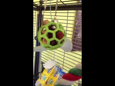 Food and treat tips for parrots of all types!