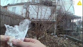 """Ein Polizist in Baltimore hat offenbar versucht, einem Beschuldigten Drogen unterzuschieben. Er deponierte Drogen auf einem Grundstück, um diese wenig später zu """"finden"""". Zum Verhängnis wurde dem Beamten, dass seine Bodycam die Aktion aufzeichnete."""