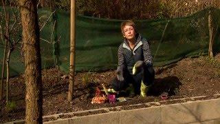 Mit mi mellé ültessünk (Allelopátia) - Kertbarátok - Kertészeti TV - műsor