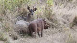 Mammals Of Ethiopia