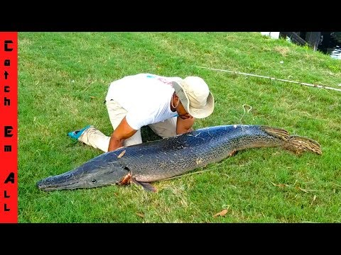 BIGGEST Freshwater FISH CAUGHT in CITY! **MEGALODON**