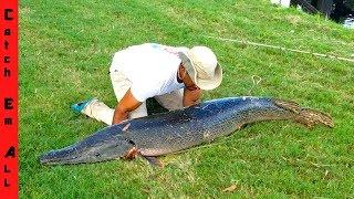 Video BIGGEST Freshwater FISH CAUGHT in CITY! **MEGALODON** MP3, 3GP, MP4, WEBM, AVI, FLV Agustus 2019