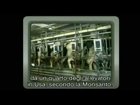 i segreti delle multinazionali: allarme antibiotici nel latte!