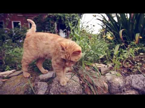 ТАЙНАЯ ЖИЗНЬ ДОМАШНИХ ЖИВОТНЫХ | ГОВОРЯЩИЕ КОТЫ